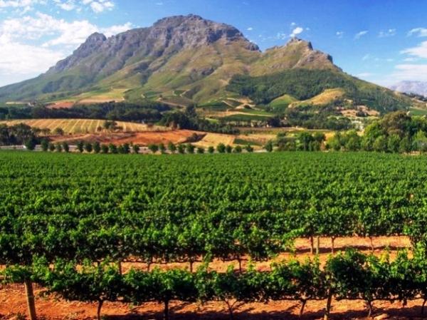 Winestyle Travel, una empresa especializada en organizar viajes y eventos gastronómicos y enológicos