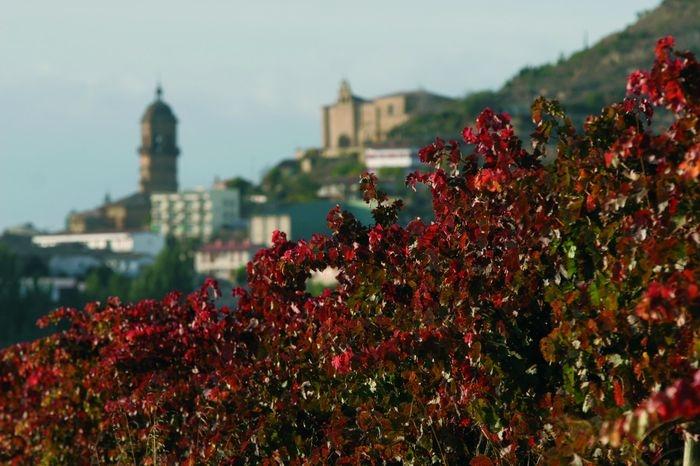 ILa Ruta del Vino de Rioja Alavesa lleva desde siempre a tu lado.